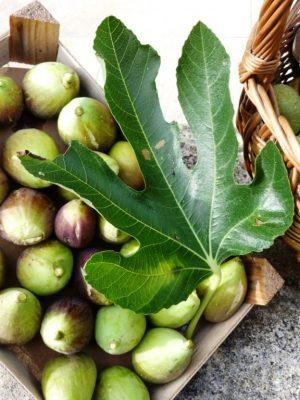récolte de saison : les figues du moulin