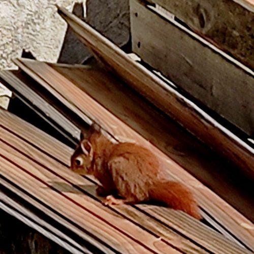 Un Petit écureuil S'est Invité Au Moulin